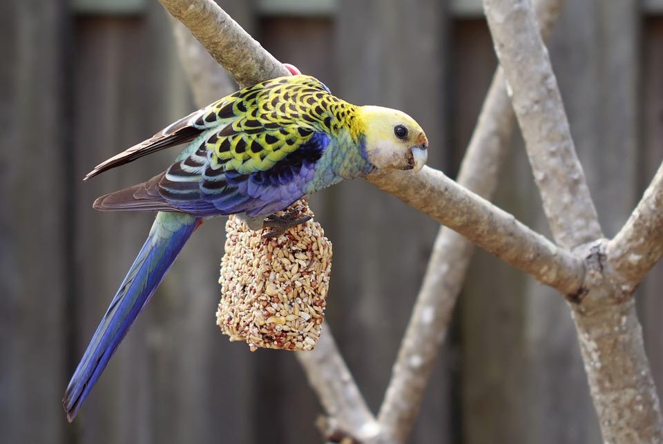 Burung yang Cocok Untuk Masteran